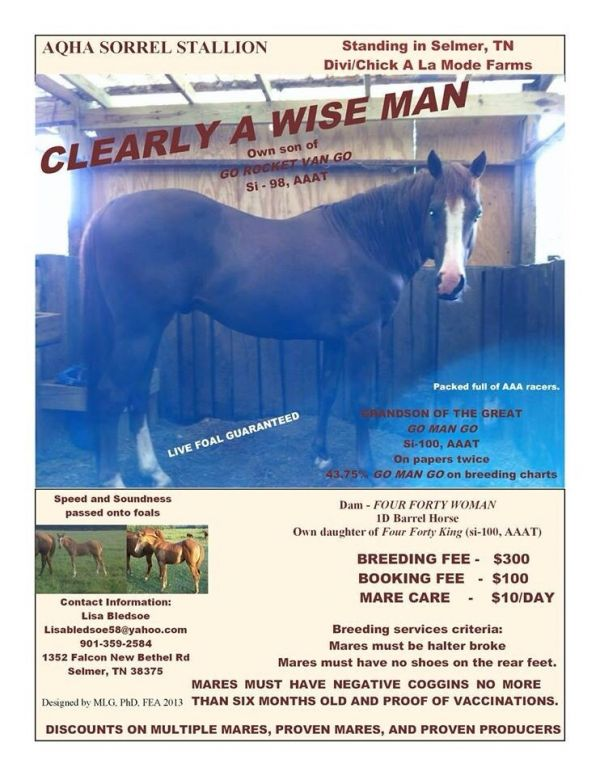 Sorrel Quarter Horse Stallion for Sale in Tennessee