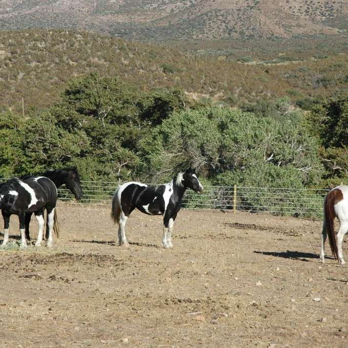 Banner Queen Ranch