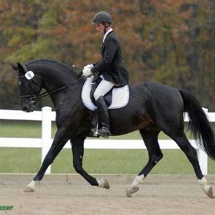 Mountain Creek Sport Horses