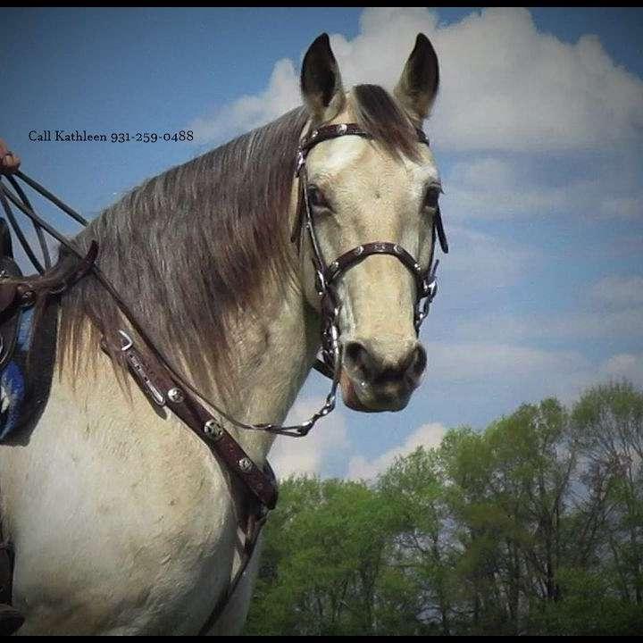 Starlight Pleasure Trail Horses