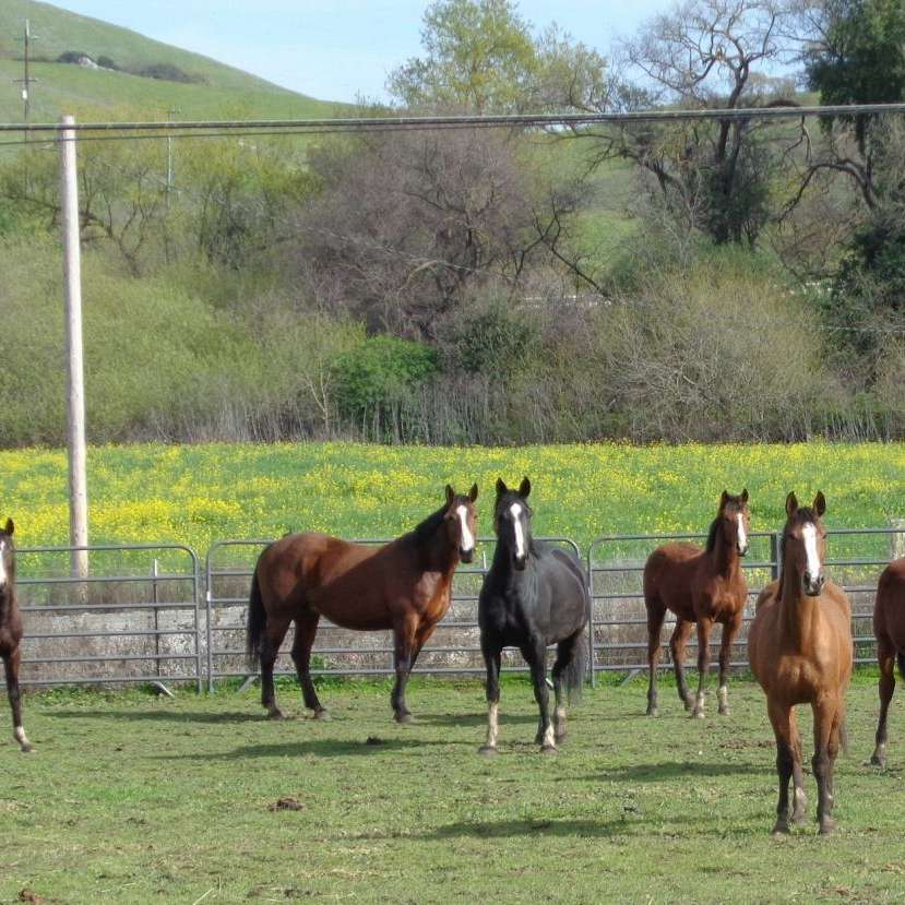 Hansen Sport Horses