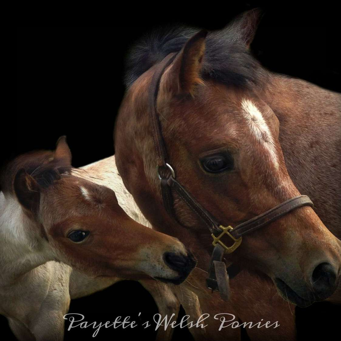 Ready To Roll Stables - Payette's Ponies