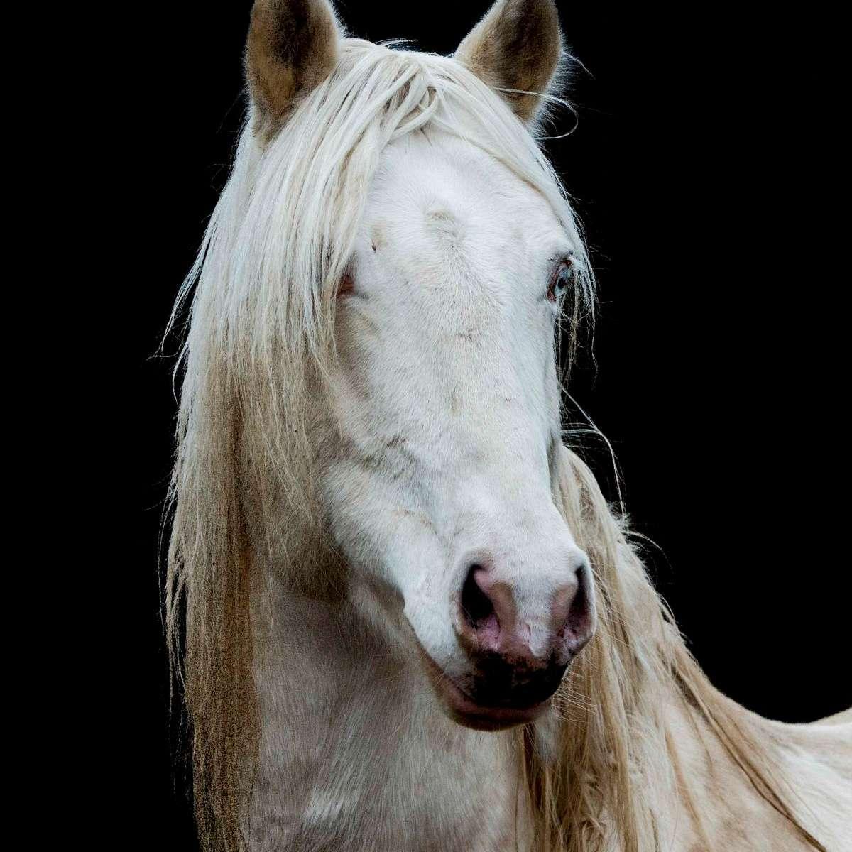Marlborough Mustangs