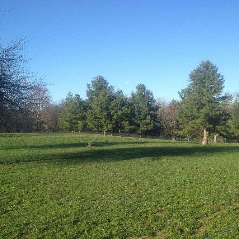 Green clover farm