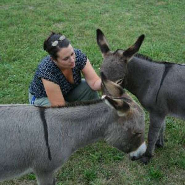 Copper Star Farm Miniature Donkeys