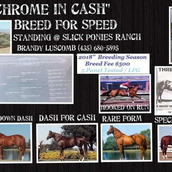 Slick Ponies Ranch