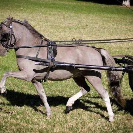 I AM Ranch Miniature Horses