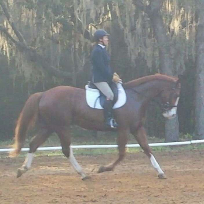 Glover's Stables  Equestrian Center