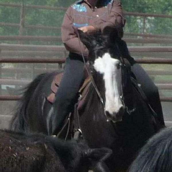 Bieber Performance Horses
