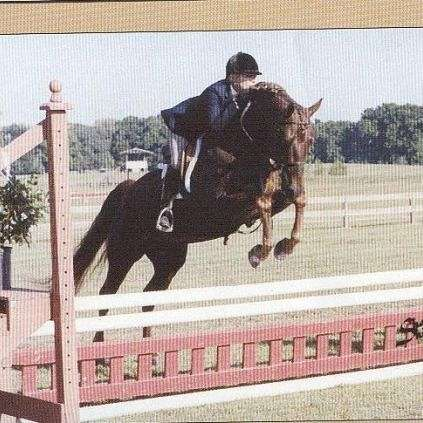 Promised Land Equine and Canaan Farm Morgans