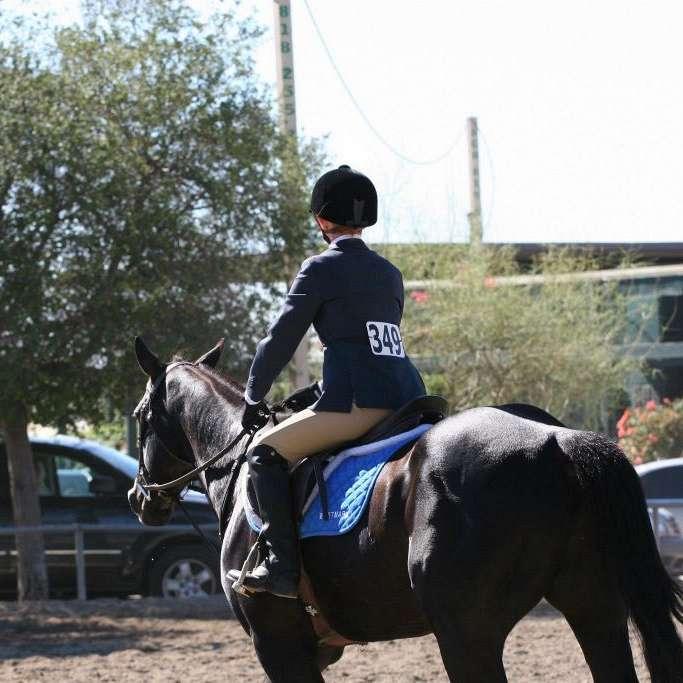 D&Z Equestrian.