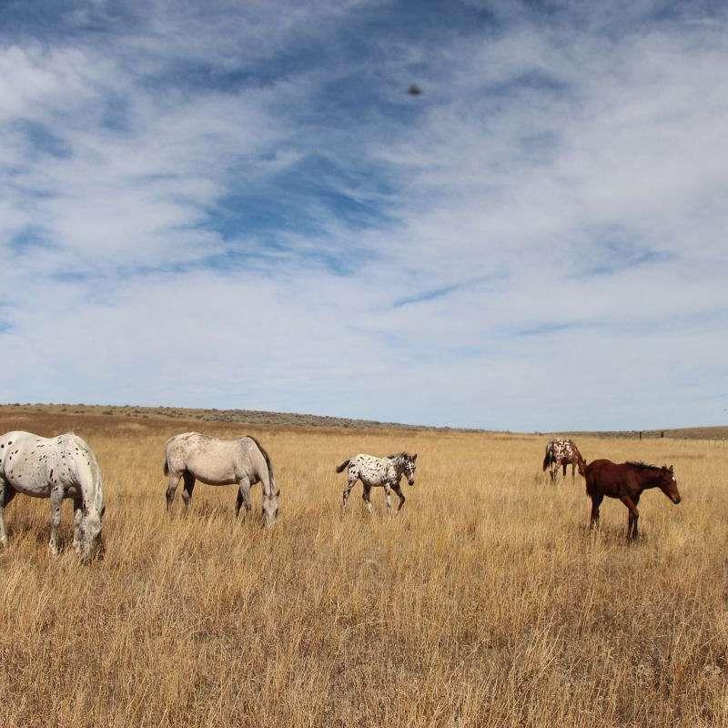 Appy Acre Ranch