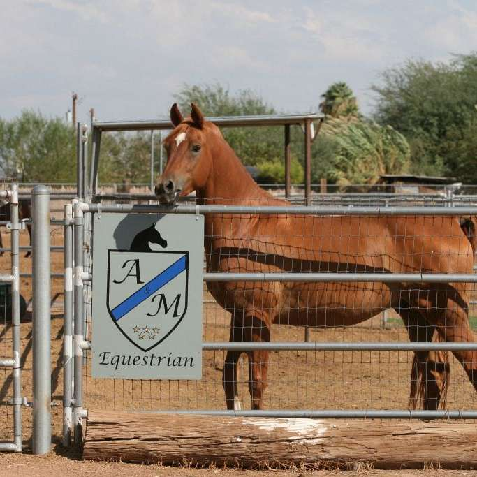 A and M Equestrian