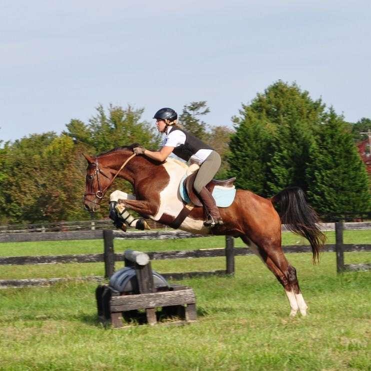 Super G Sporthorses