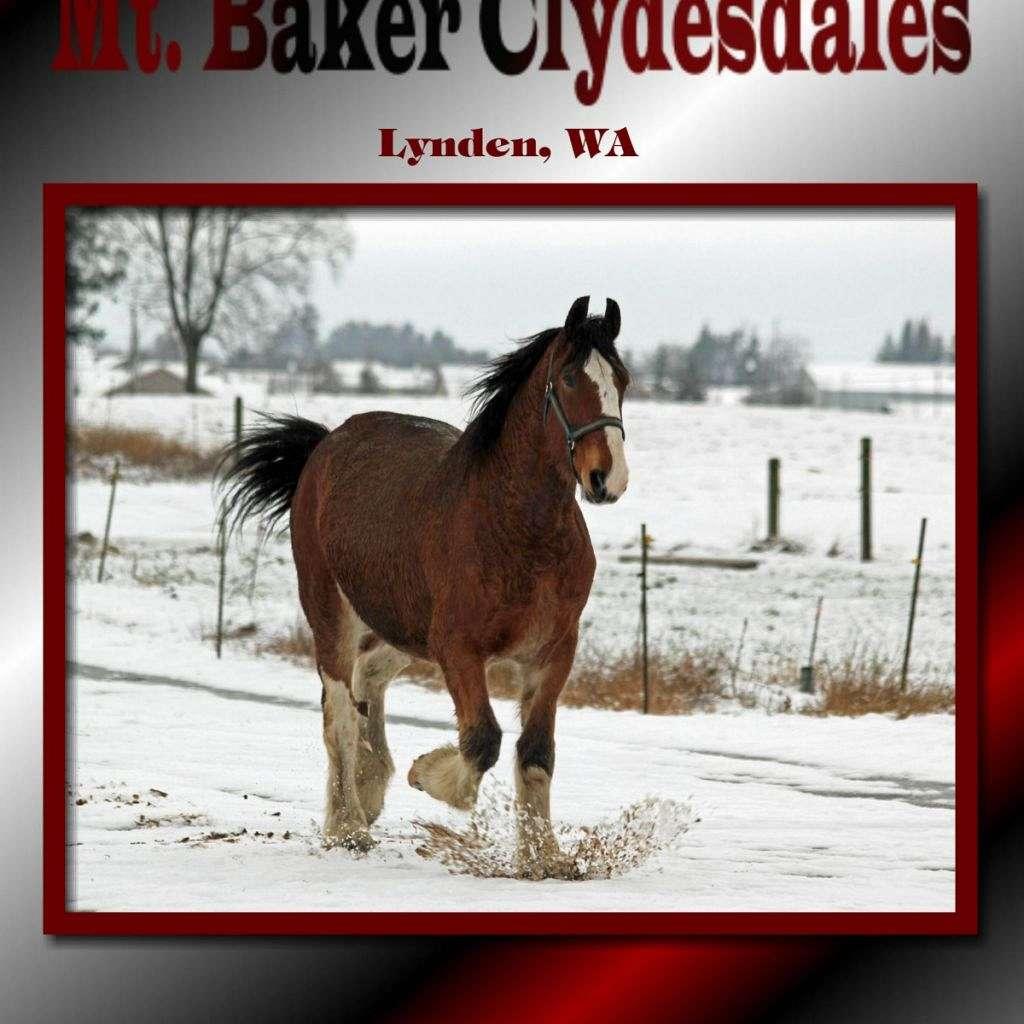 Mt. Baker Clydesdales