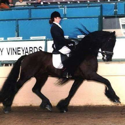 Fairytale Friesian Finder Service Inc