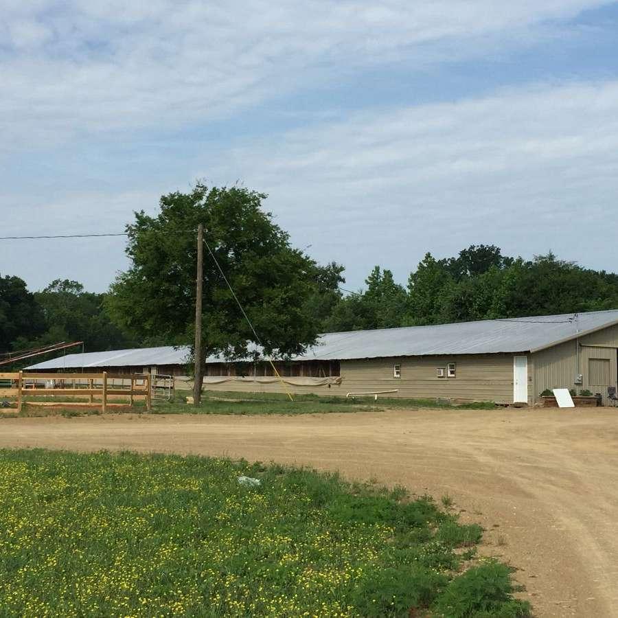 Billy Korsack Show Horses at Fresh Paint Farm