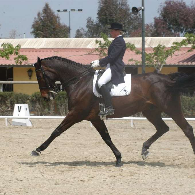 Spanish Dressage horses