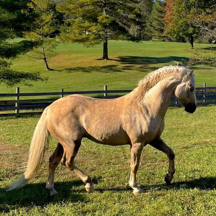 Stargazey Farms - Home Of Stargazey Irish Draughts