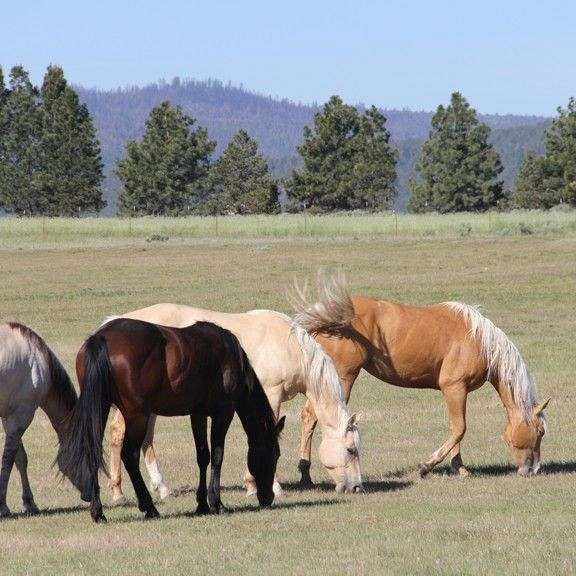 Flying H Ranch  Stallion Specialties
