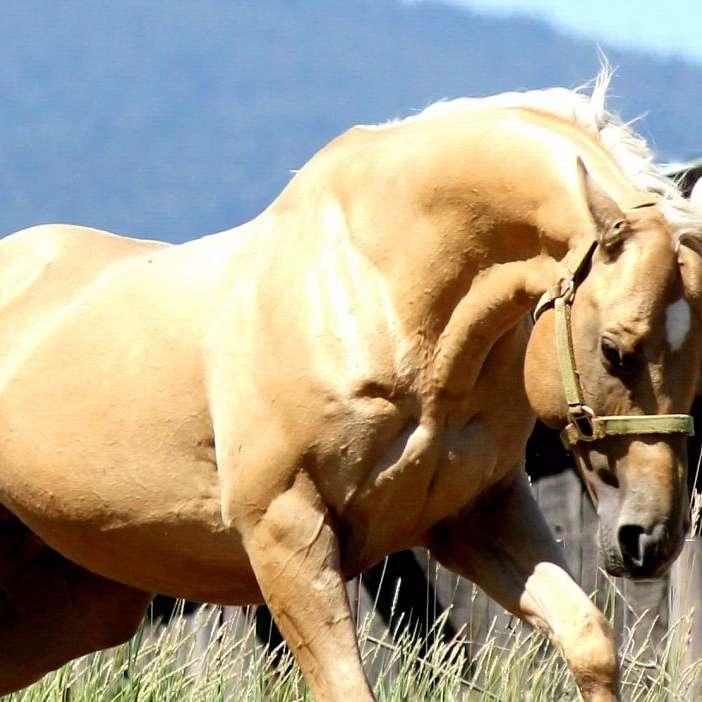 The Endure Ranch