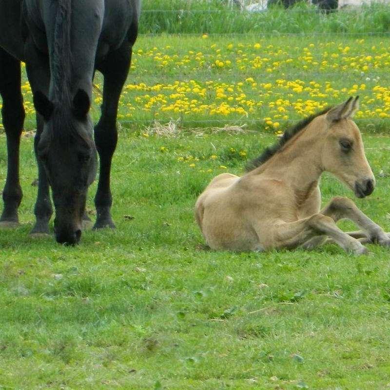 AA Horses