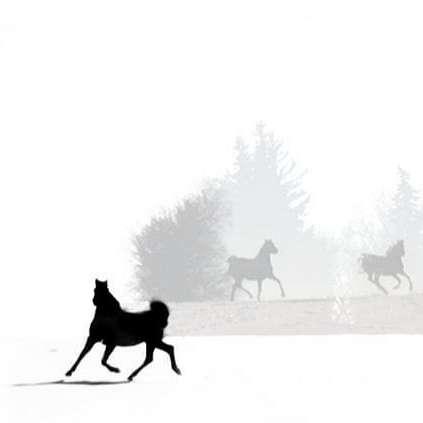 Spirit Creek Arabians