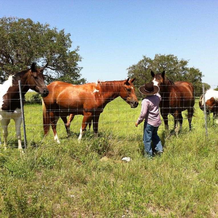 Bar N Performance Horses