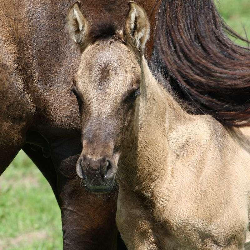 Rockin' K Quarter Horses