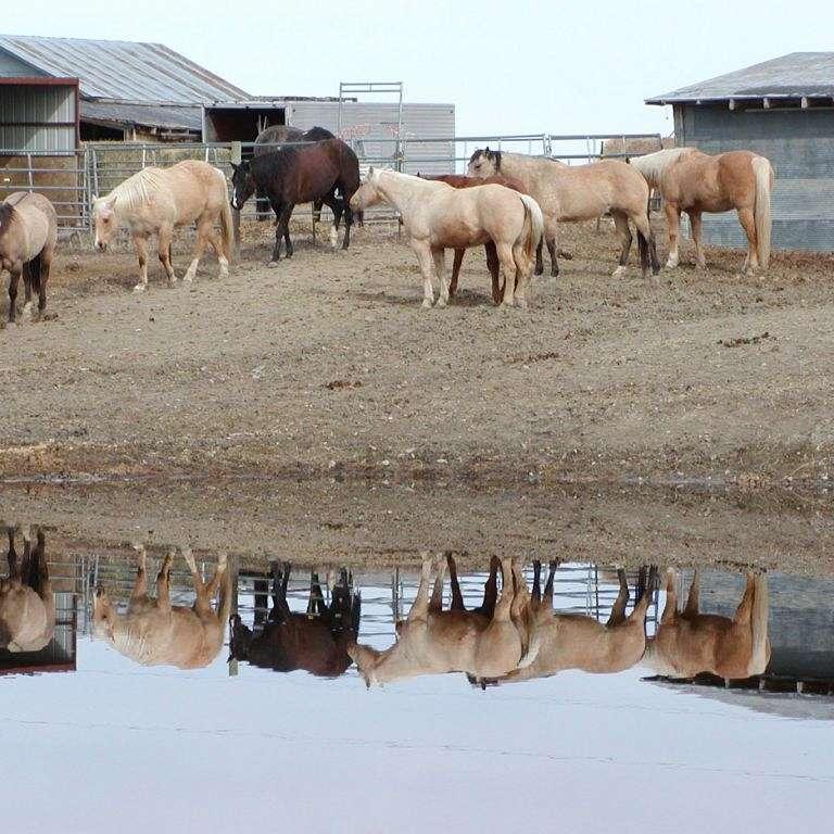 DS Bar Quarterhorses