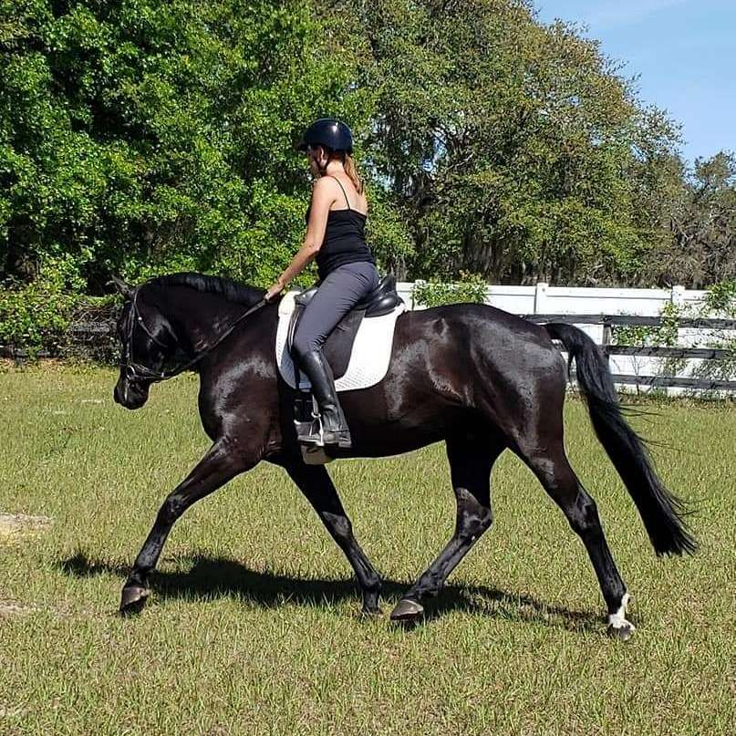 Caring Cadence Professional Horse Services at Fidd