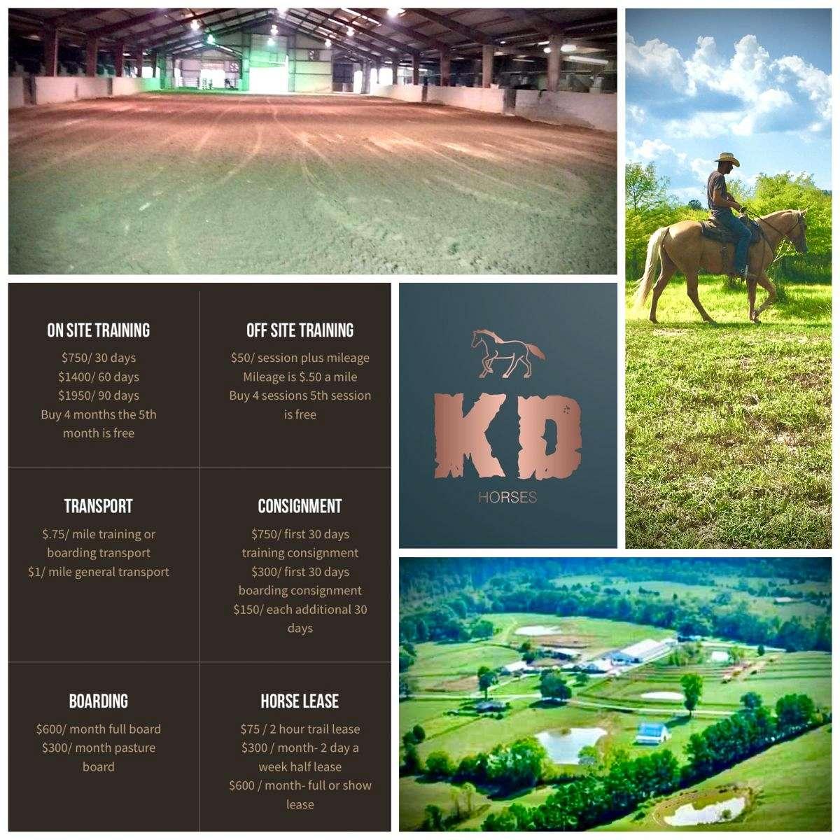 KD Horses