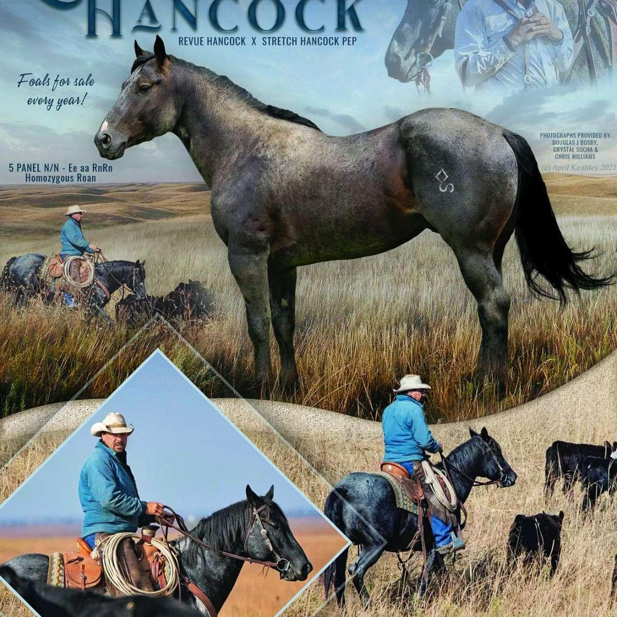 Diamond S Quarter Horses
