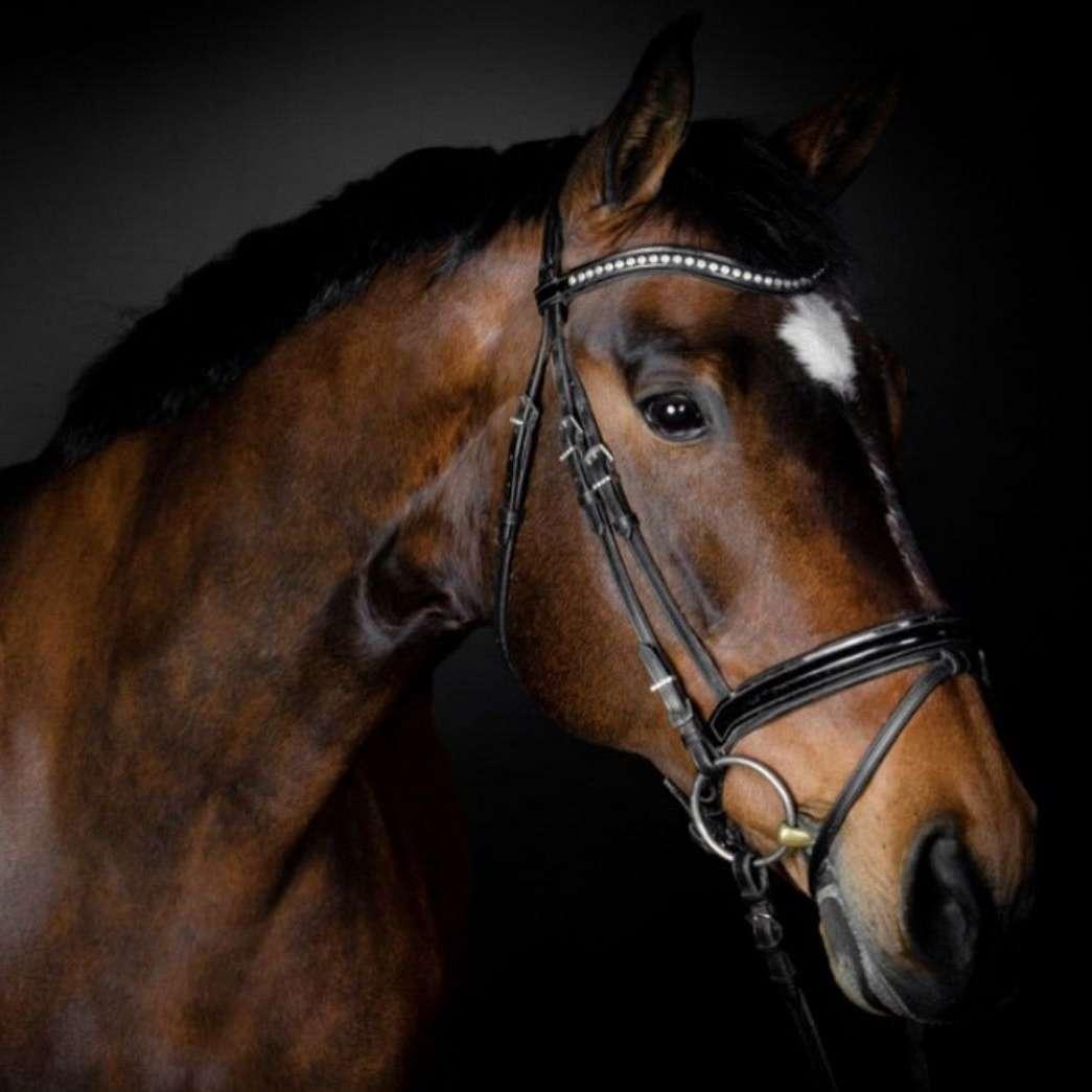 Canyon Sport Horses