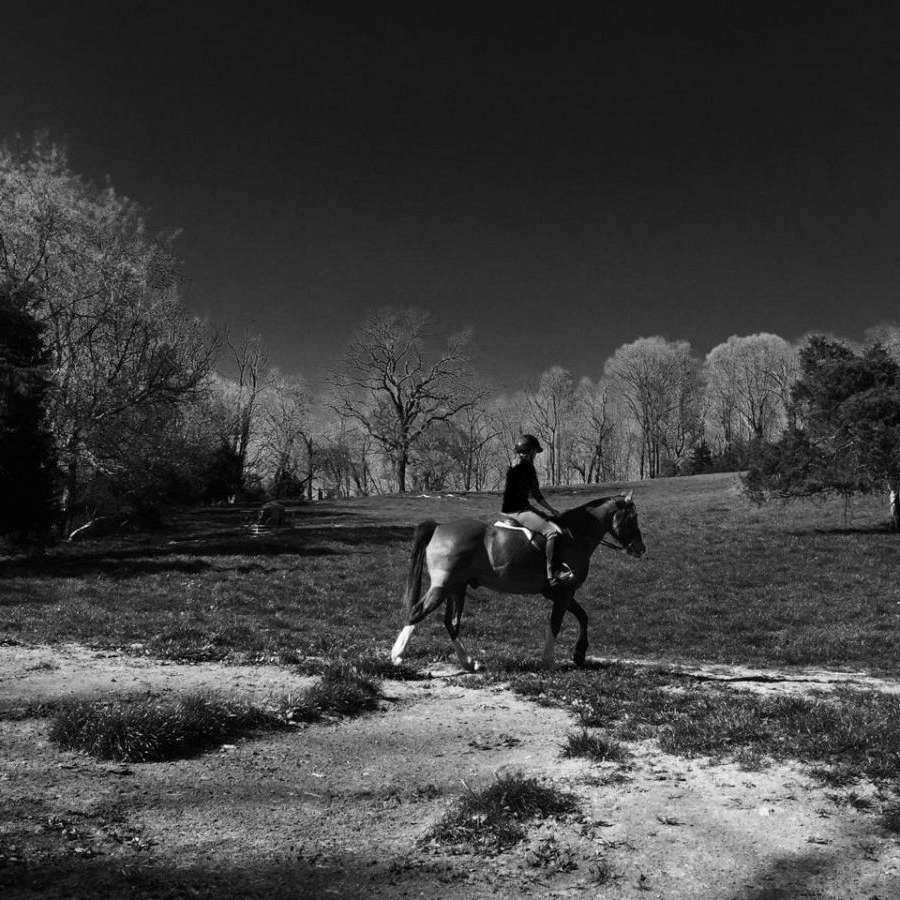 Shenandoah Sporthorses