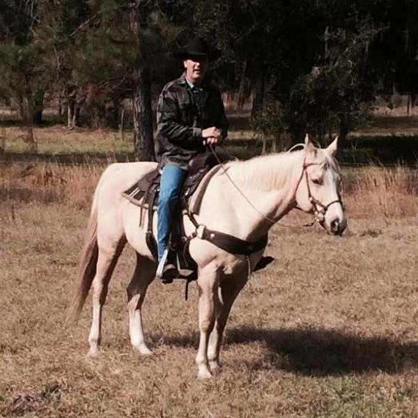 Dan Post Quarter Horses