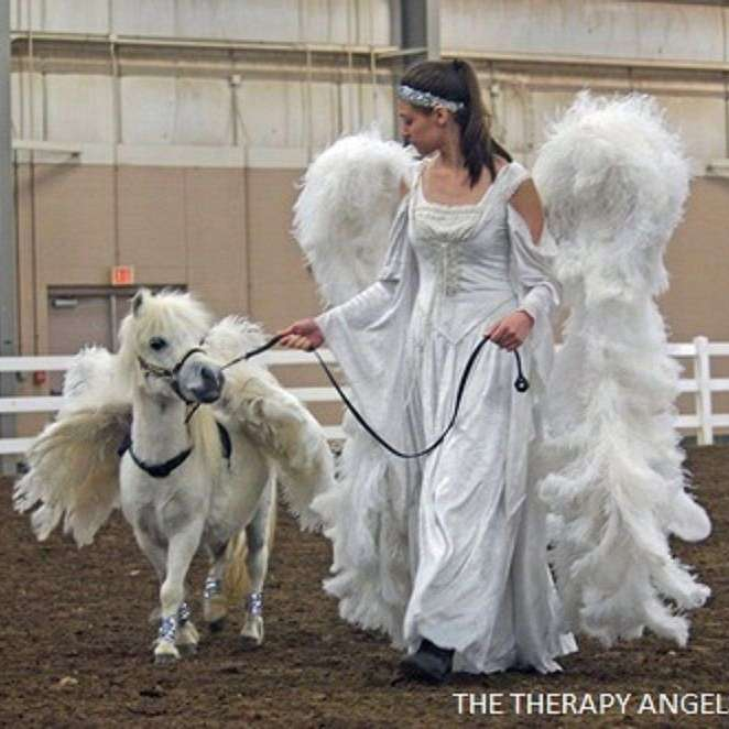 The Therapy Angels Therapy Miniature Horses