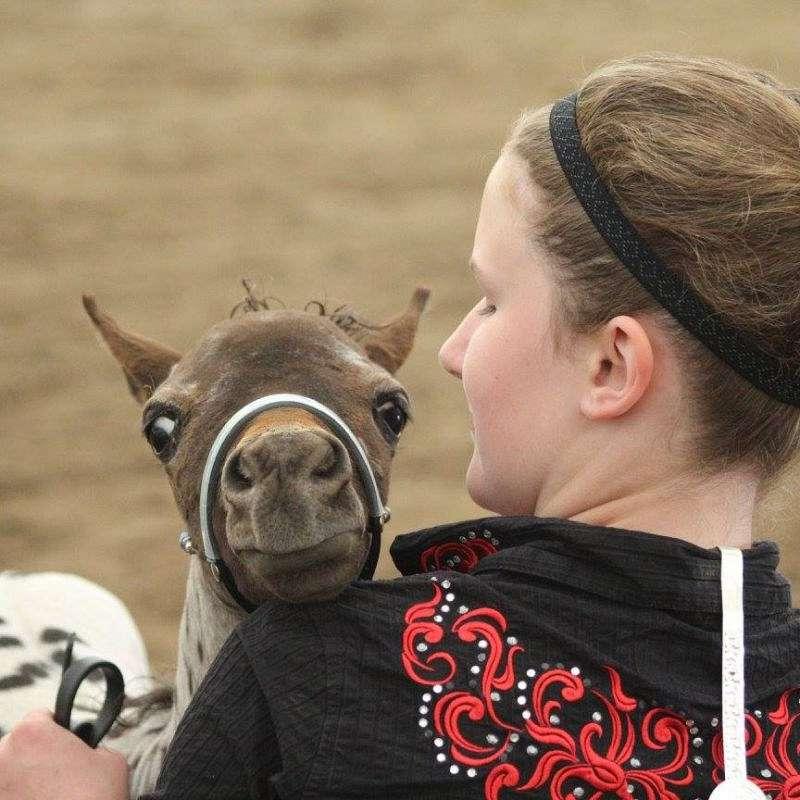 Free Rein Equine