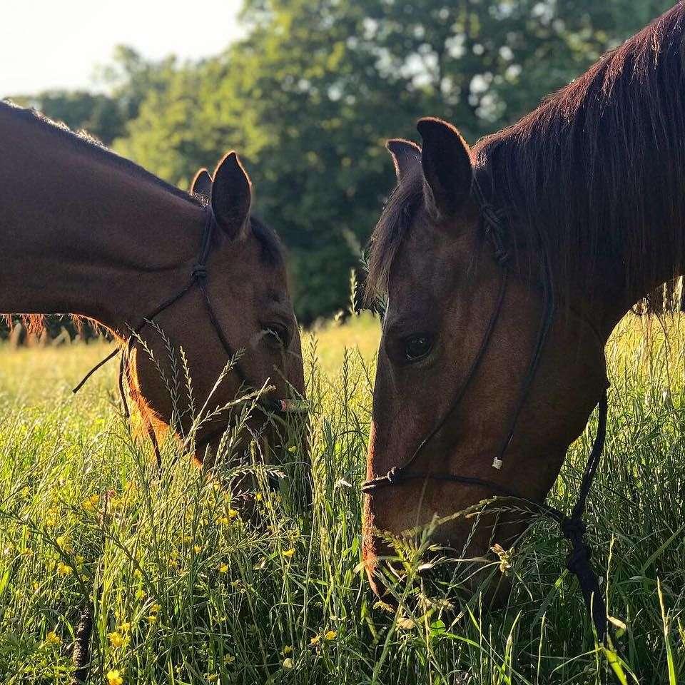 Heart S Performance Horses