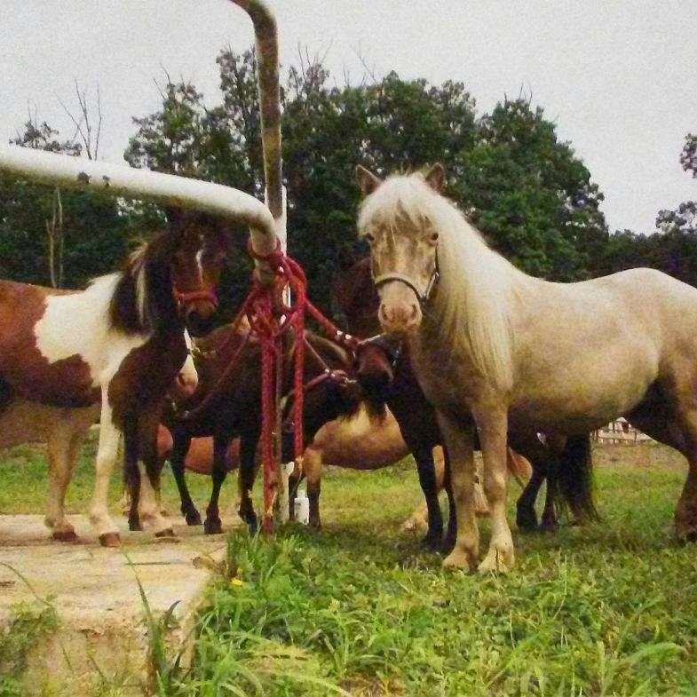 Special Editions Ranch
