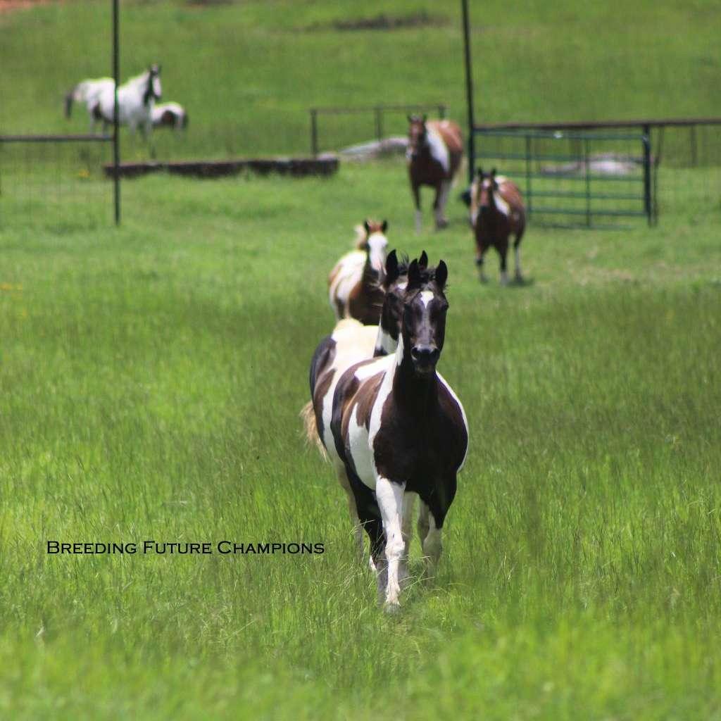 Lazy Susan Ranch LLC