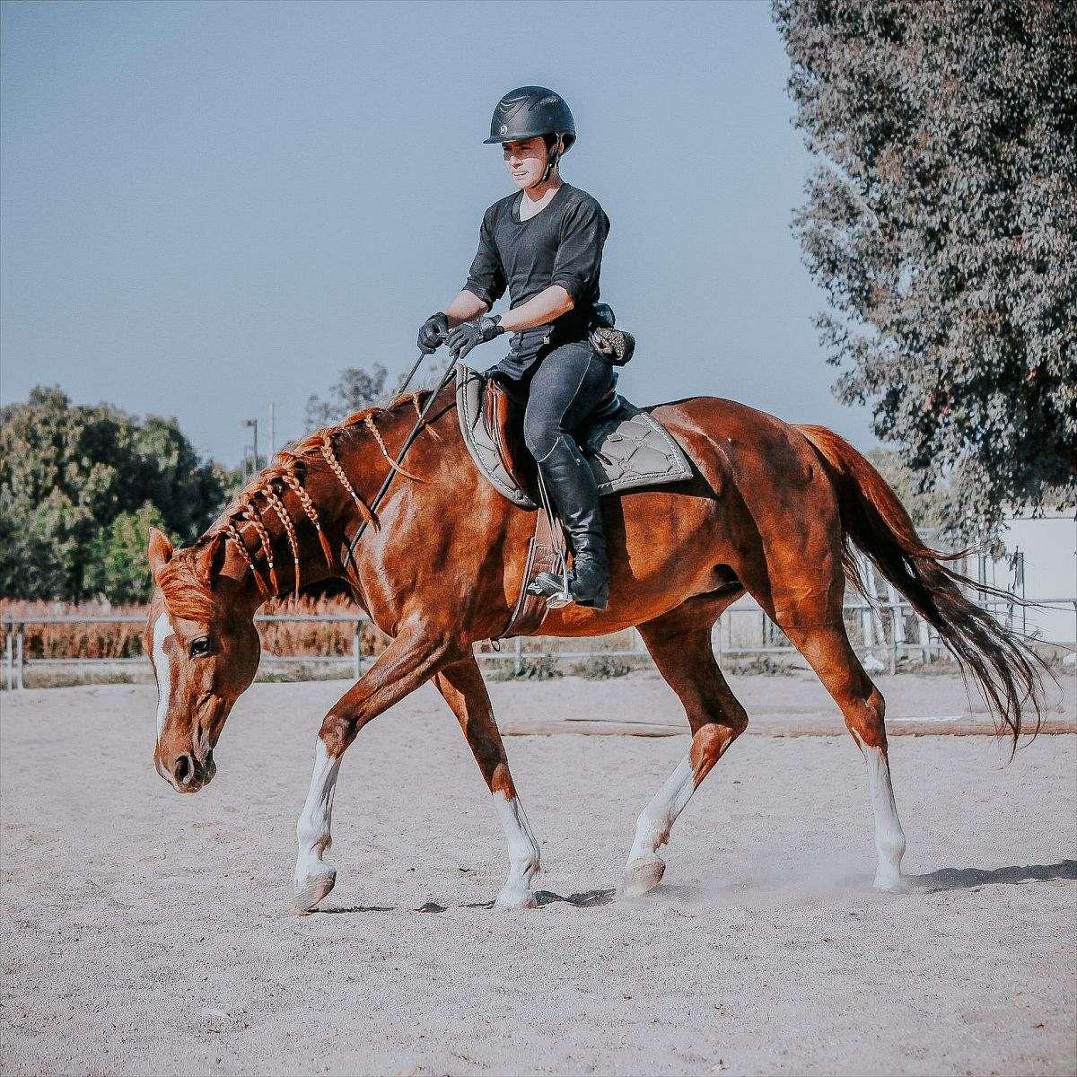 Meyer Horsemanship