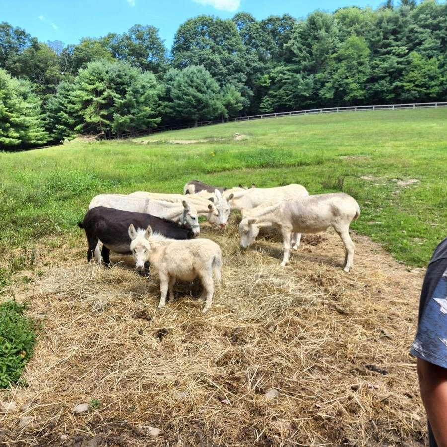 Blose Acres Farm