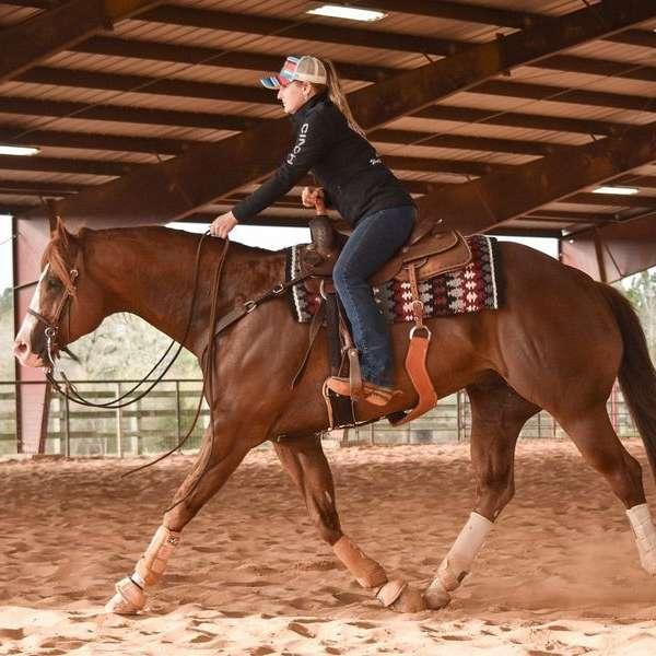 Holman Halter Horses