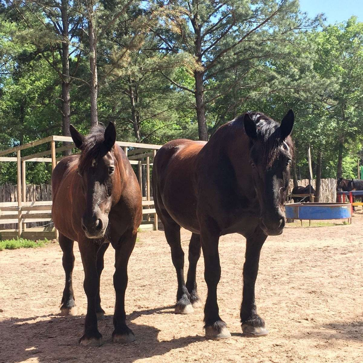 Knights Landing Equestrian Center