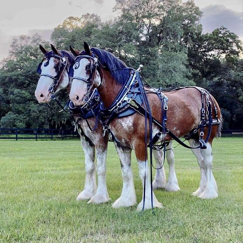 Big Horse Ranch