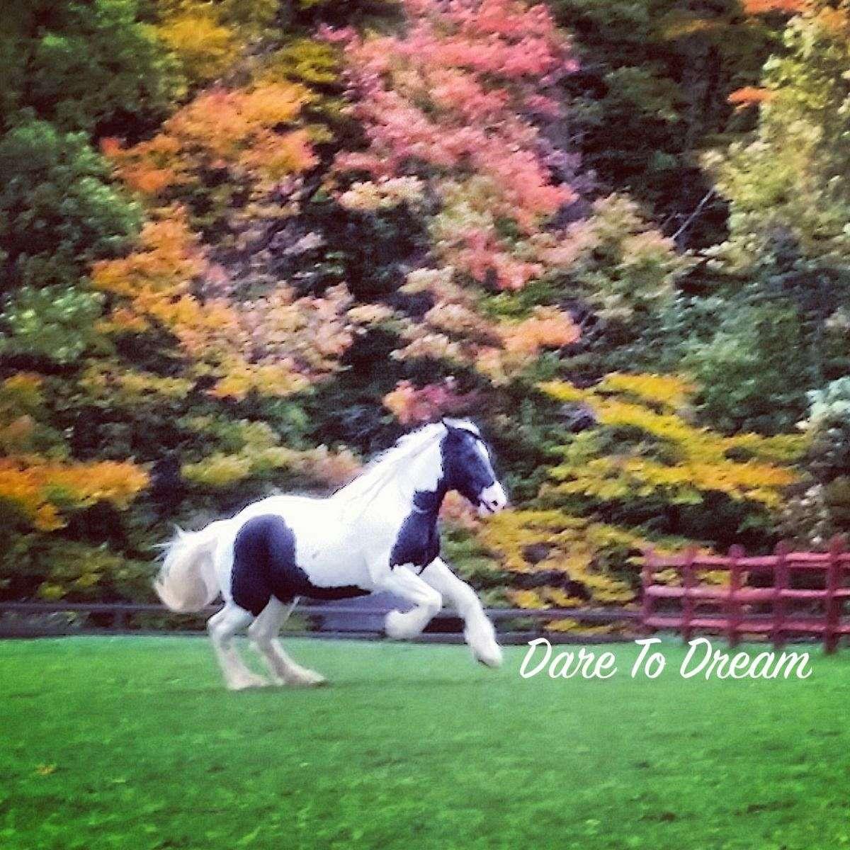 DTD Equestrian