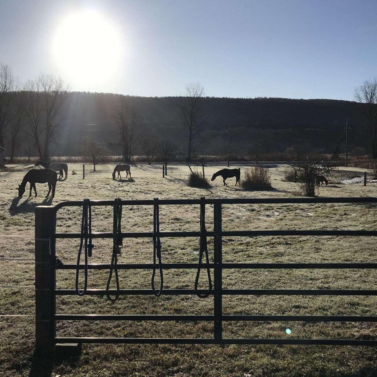 H&S Equestrian Acres