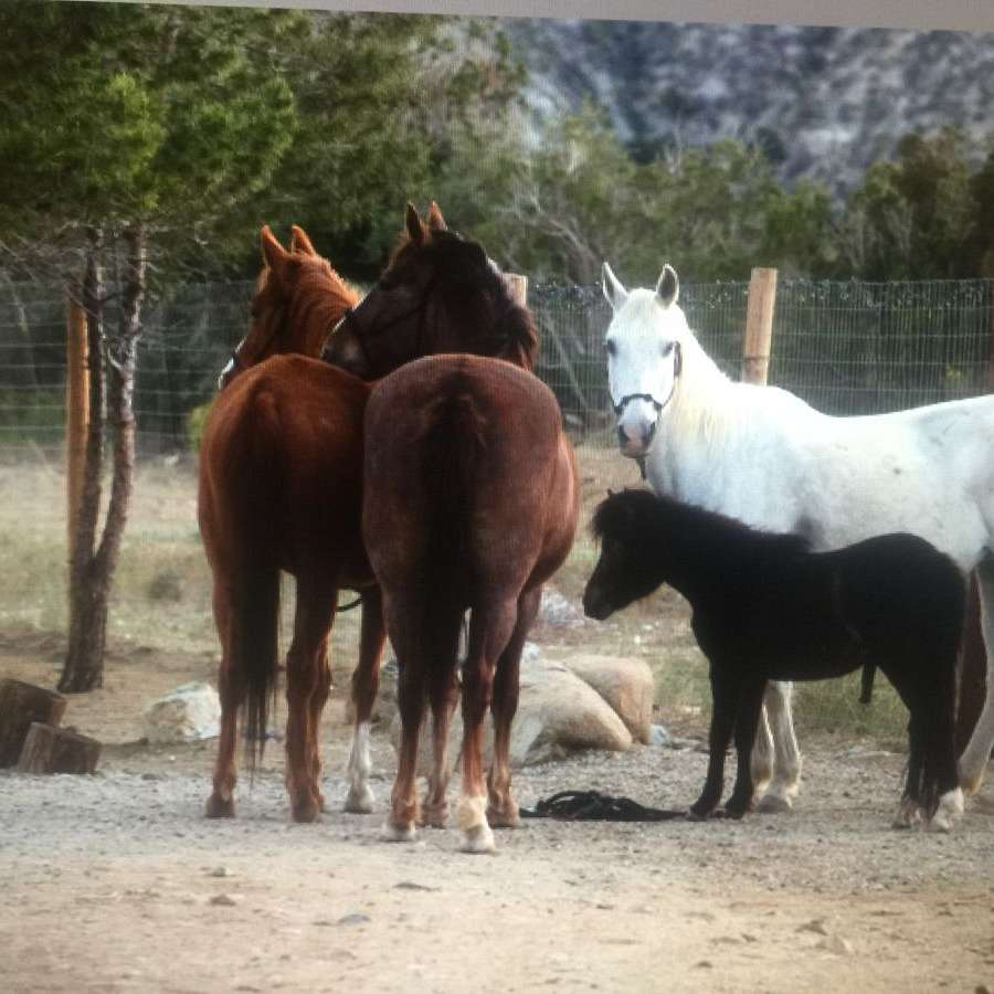 Freedom Ranch Equestrian Connections