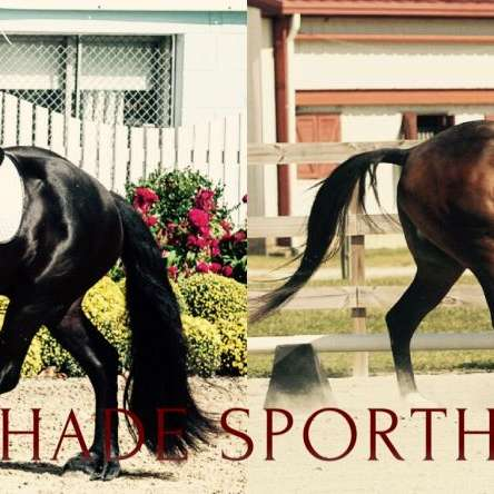 Oak Shade Sporthorses LLC
